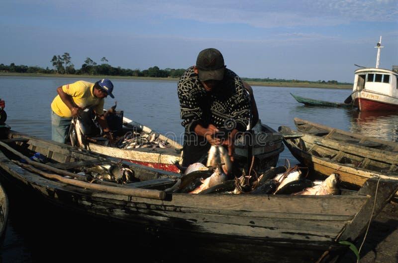 amazon basen zdjęcie stock