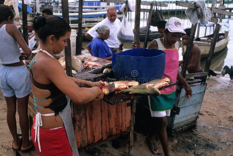 Download Amazon Basin Editorial Photo - Image: 23419711
