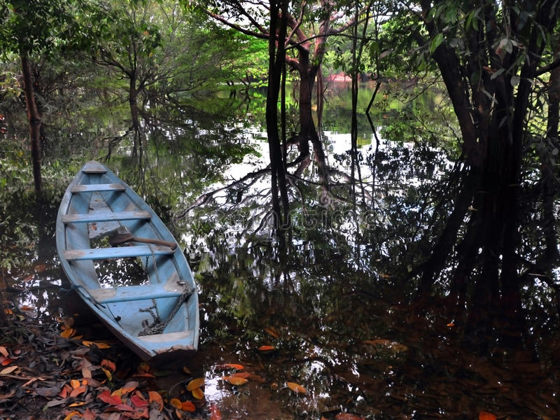 Canoe of Amazonia stock image