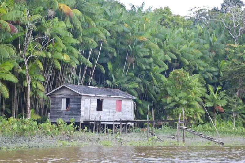 amazon dżungli życie fotografia stock