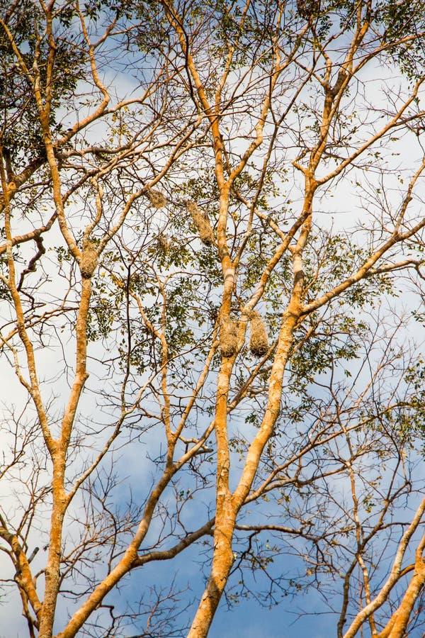 Amazon Nests royalty free stock photography