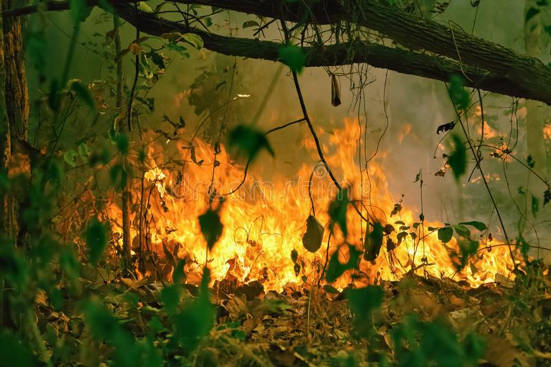 Amazon rain forest fire disaster is burning. At a rate scientists have never seen before royalty free stock image