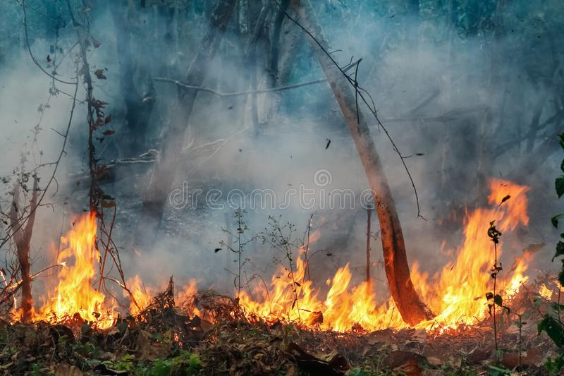 Amazon rain forest fire disaster is burning. At a rate scientists have never seen before royalty free stock photos