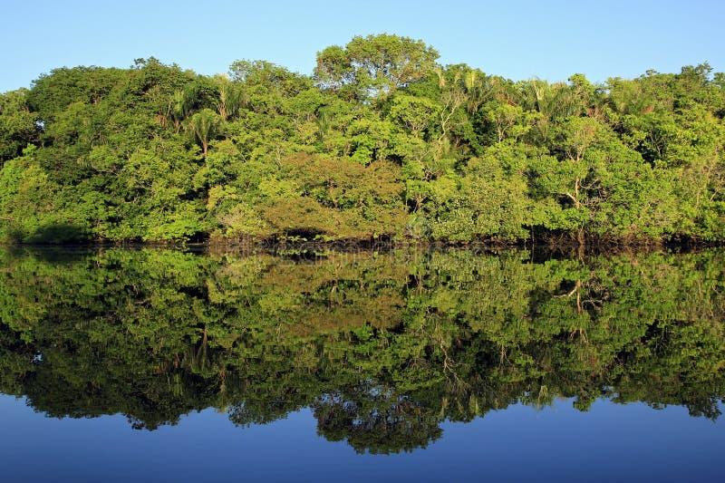 Amazon Rainforest stock images