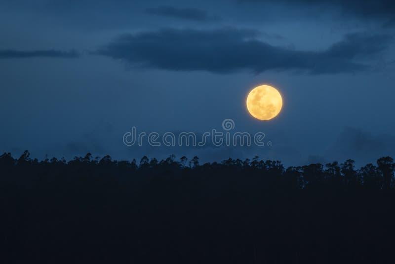 Amazon Rainforest Full Moon, Ecuador. Full moon rising above the Amazon Rainforest, Yasuni National Park. The Amazon river basin comprises the countries of stock photo