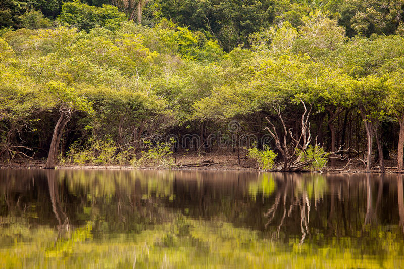 Amazon river. Amazon forest and trees reflection on Amazon river stock photography