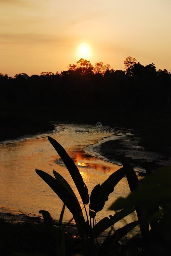 Amazon River solnedgång royaltyfria bilder
