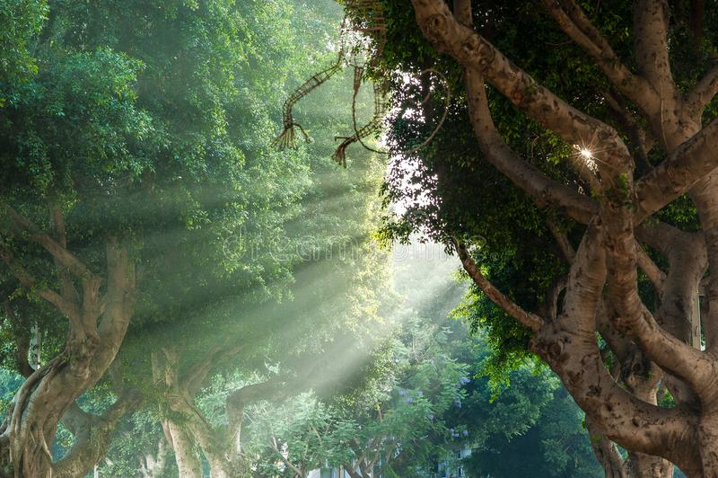 The Amazon on Rothchild street stock images