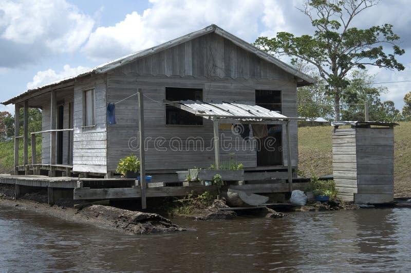 amazon rzeka żyje zdjęcia royalty free
