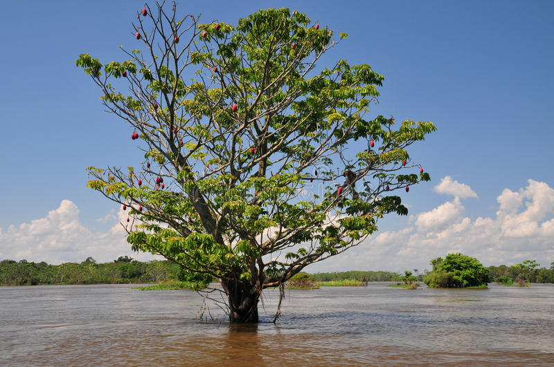 Amazon seasonal flooding (The Amazonia) royalty free stock photos