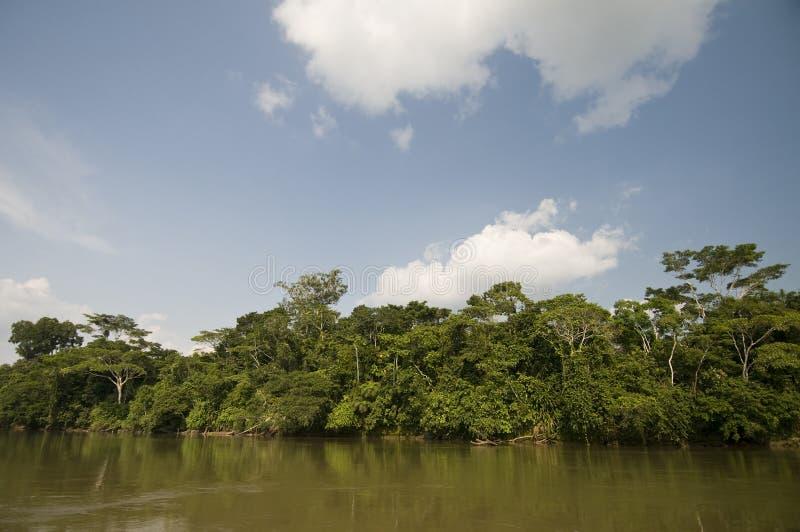 Download Amazonas-Bassin stockbild. Bild von park, farbe, malerisch - 12200315