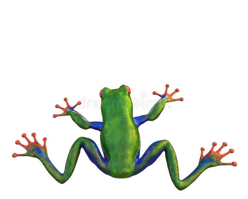 Amazonas-Frosch in einem weißen Hintergrund stock abbildung