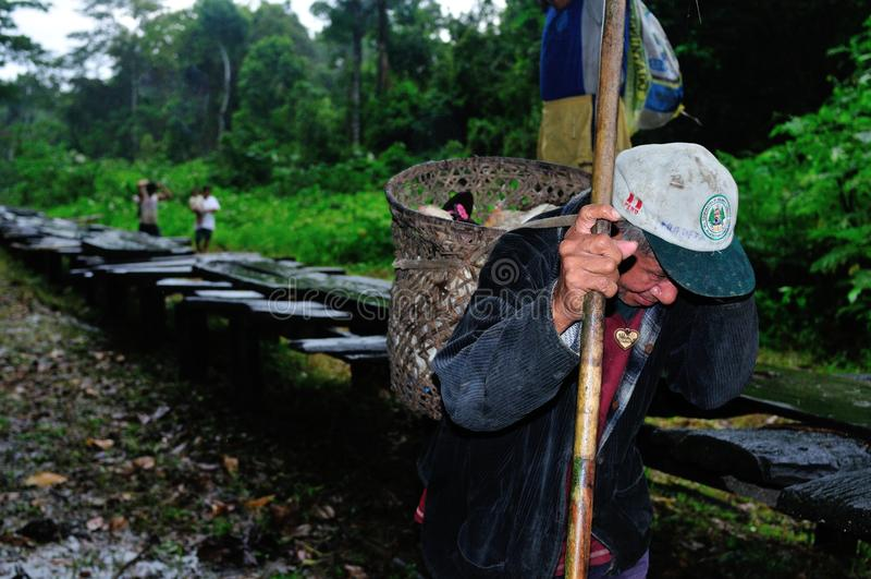 Amazonas - Peru fotografia de stock royalty free