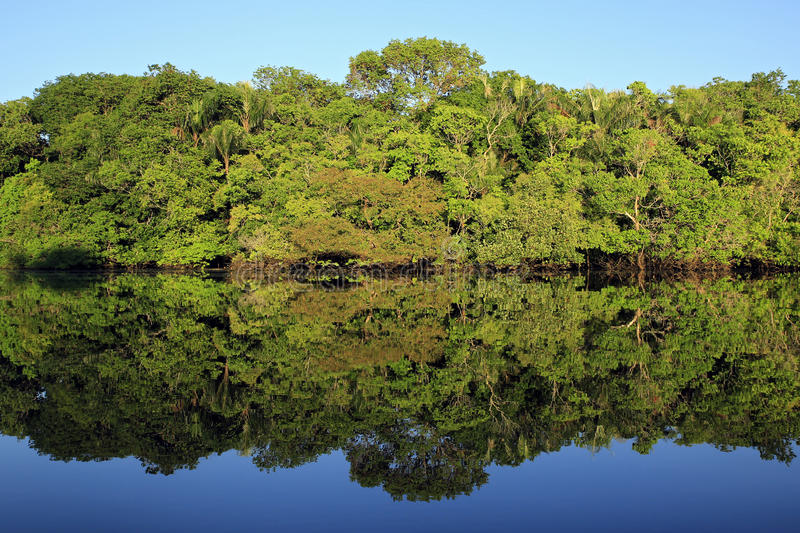 Amazonas-Regenwald stockbilder
