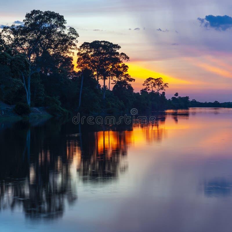 Amazonas-Regenwald-Reflexion bei Sonnenuntergang lizenzfreies stockfoto