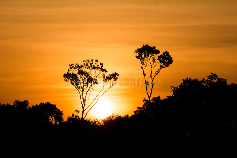 Amazonas-Sonnenuntergang stockfotos
