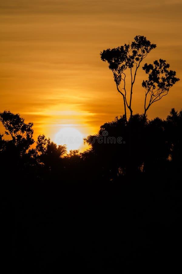Amazonas-Sonnenuntergang stockbild