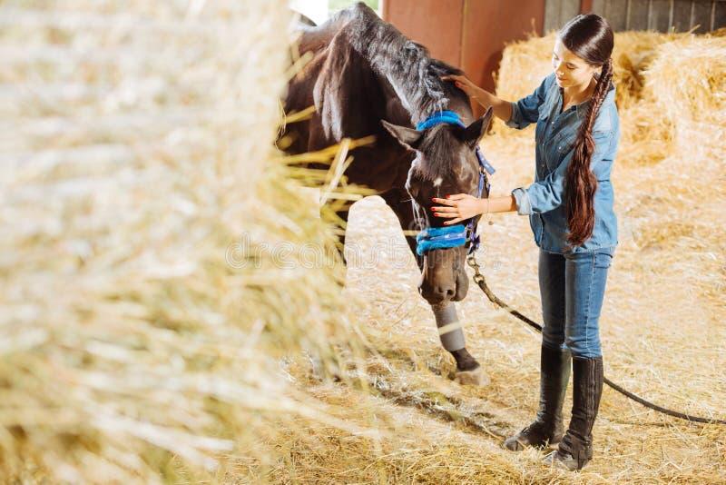 amazone aux cheveux foncés alimentant le cheval foncé avec la paille photographie stock