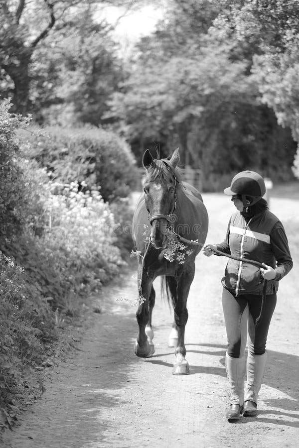 Amazone dans la vitesse et le cheval spéciaux photo libre de droits