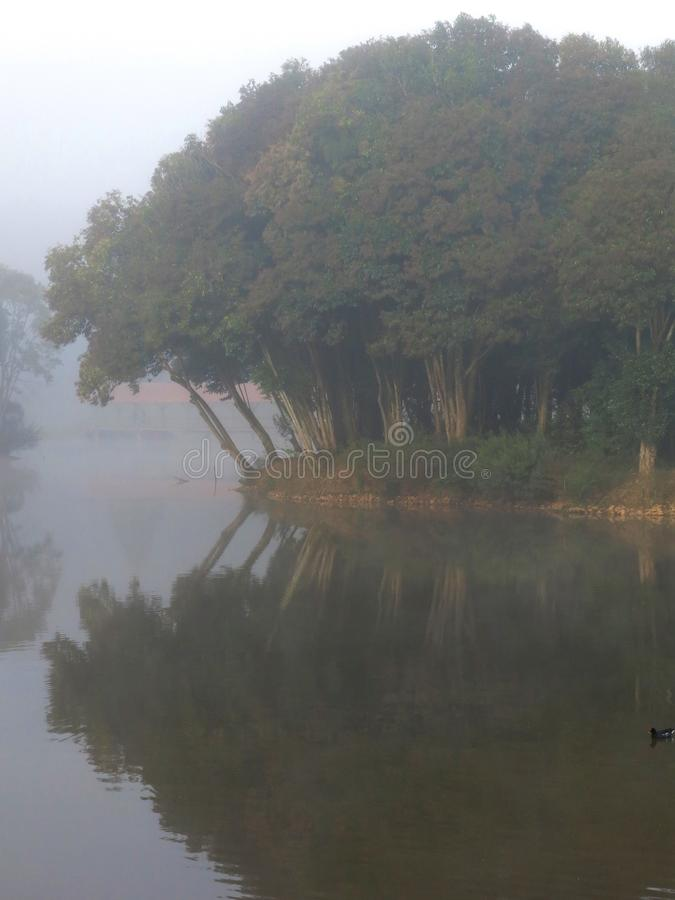 Amazonië Forest Island Mist stock afbeelding