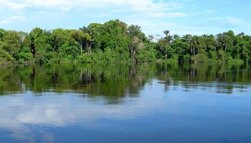 Amazonischer Wald in Brasilien lizenzfreie stockfotos