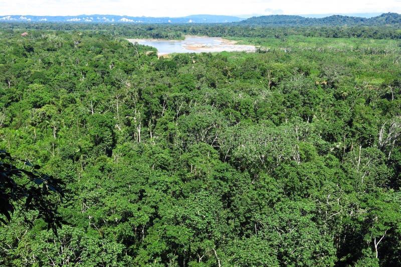Amazonka las zdjęcie royalty free