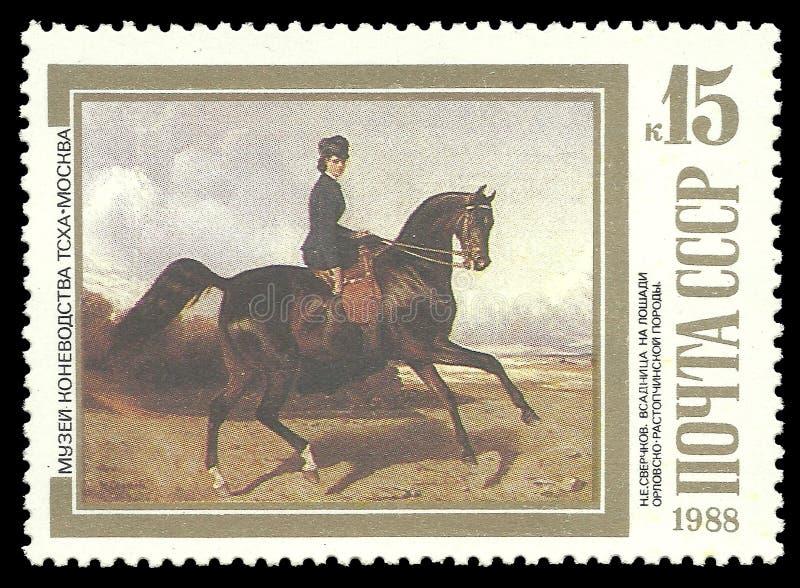 Amazzone sul cavallo di Orlov-Rastopchin fotografia stock