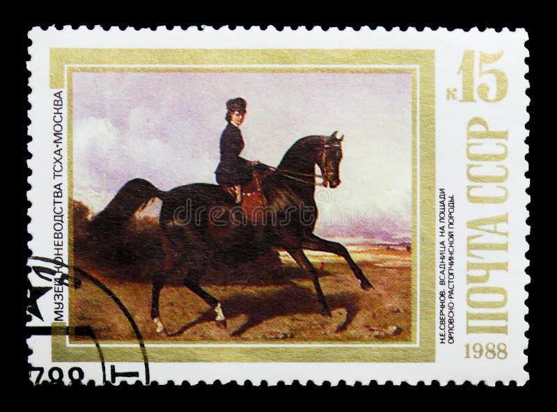 Amazzone sul cavallo di Orlov-Rastopchin (N Sverchkov), cavalli nella P immagini stock libere da diritti
