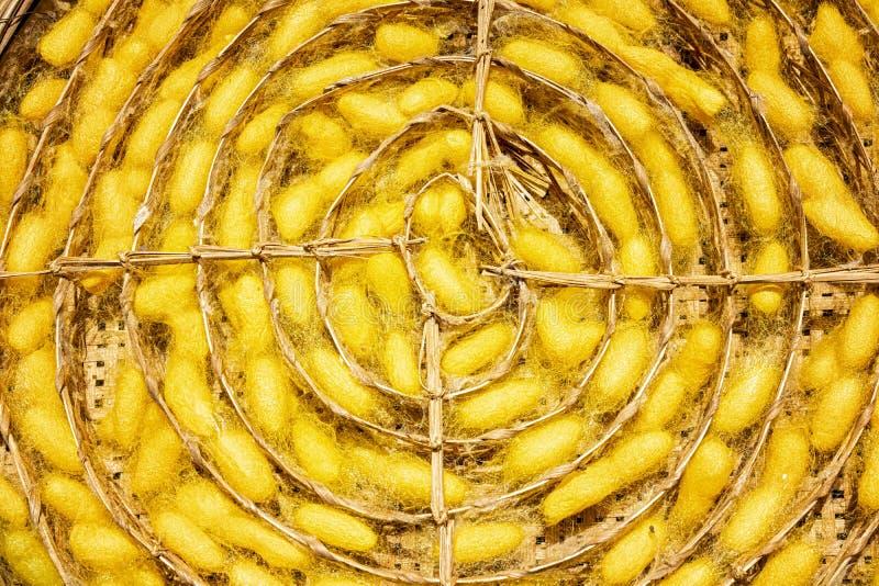 Ambachten en vakmanschap Zijde die voor zijdedraden opheffen Rij van bamboeweefsel, een mand van wormcocons Groep zijderups in ge royalty-vrije stock afbeeldingen