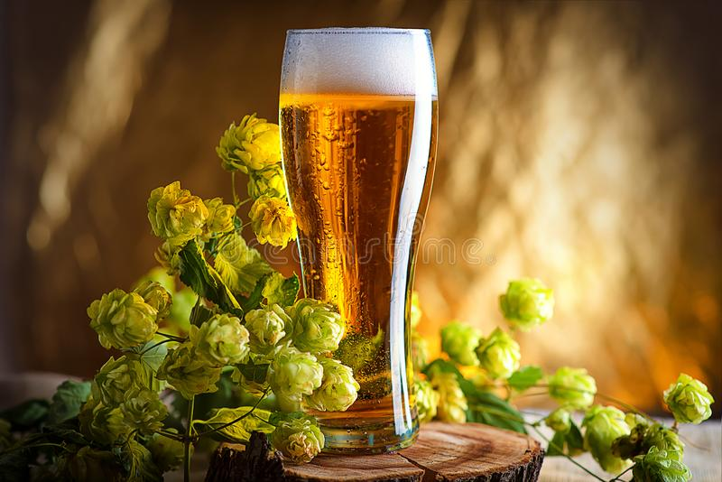 Amber beer with a sprig of hops on a wooden Board. Foam intoxicating drink in a glass glass with water droplets on. Cold Hoppy bee royalty free stock photo