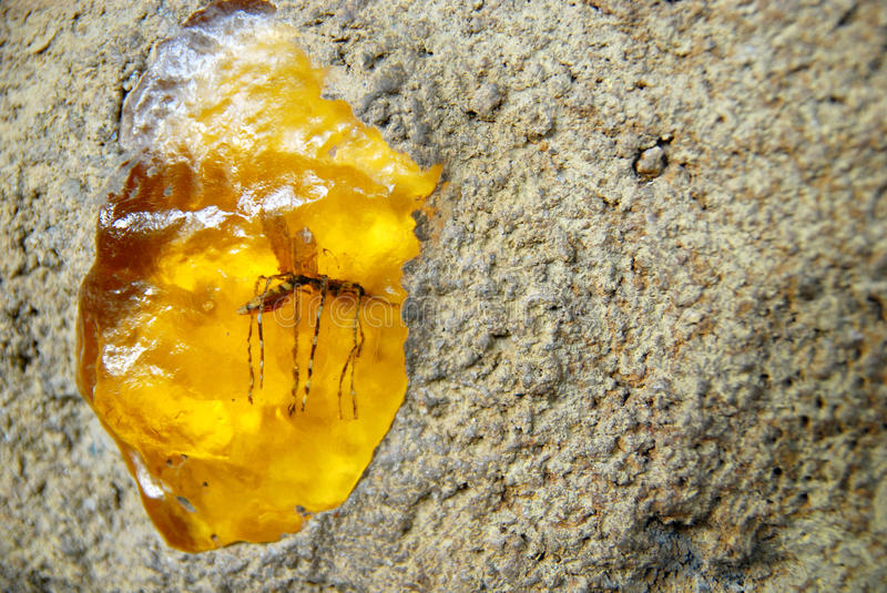 Amber insects. On the rock mosquito royalty free stock photo