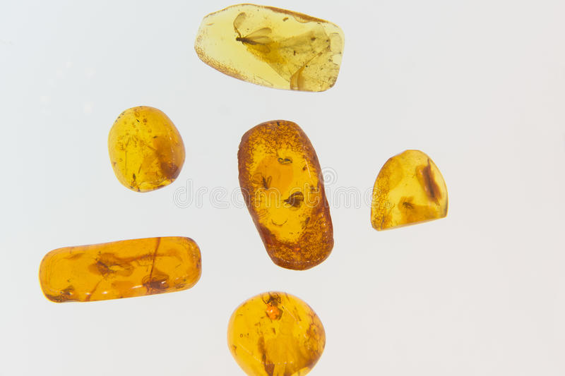 Amber with insects. Amber slices with the ancient insects who stiffened in it stock photo