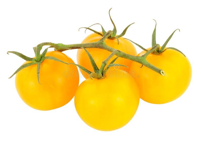 Amber Tomatoes madurada vid fresca imagen de archivo libre de regalías