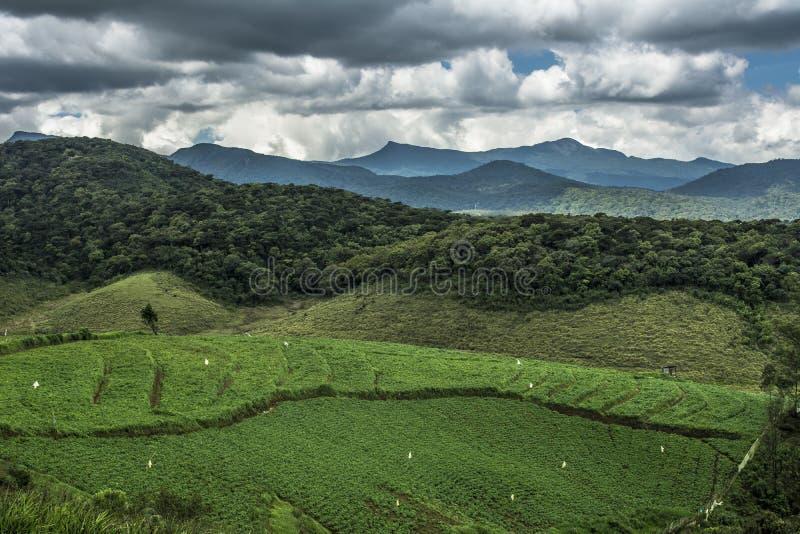 Ambewela Nuwara Eliya Sri Lanka obraz stock