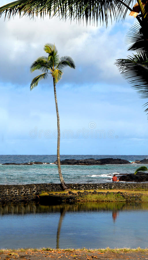 Download Ambiance on the Big Island stock photo. Image of lonely - 12339766