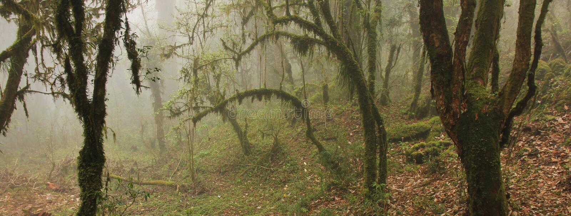 Ambiance mystique dans une forêt tropicale près de Ghandruk, Népal S'embranche o image libre de droits
