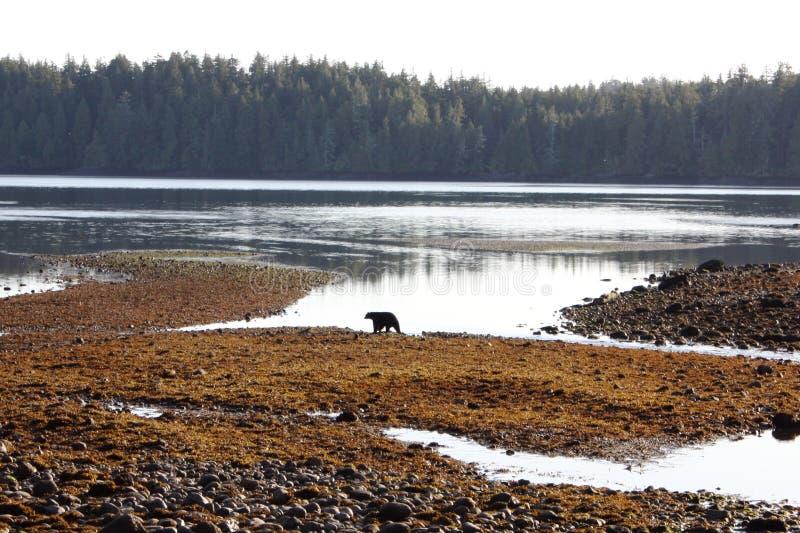 Ambiente de la isla de Vancouver imagenes de archivo