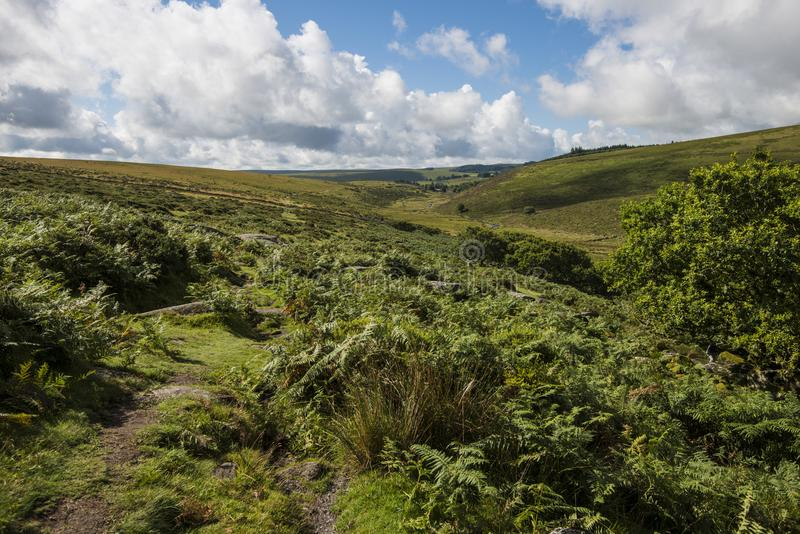 Ambiente de la madera del ` s de Wistman - un paisaje antiguo en Dartmoor, Devon, Inglaterra foto de archivo libre de regalías