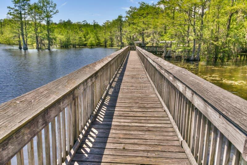 Ambiente do pântano em Louisiana foto de stock