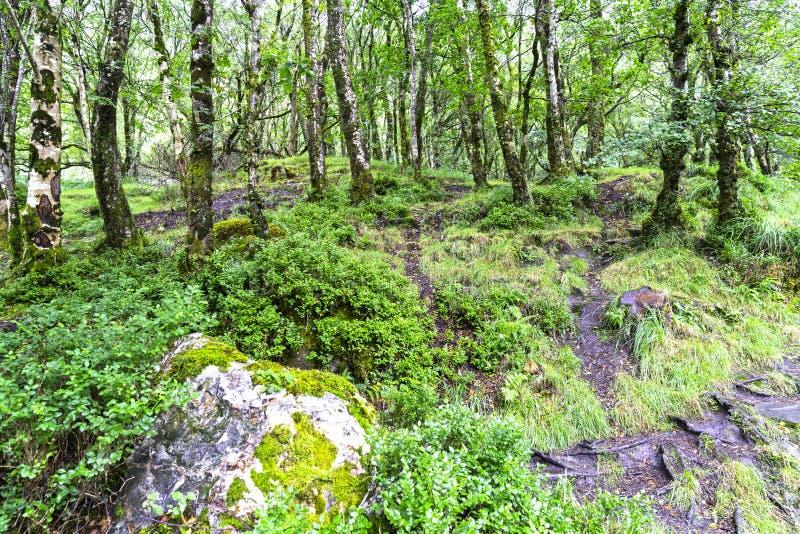 Ambiente natural do parque nacional das montanhas de Wicklow imagens de stock