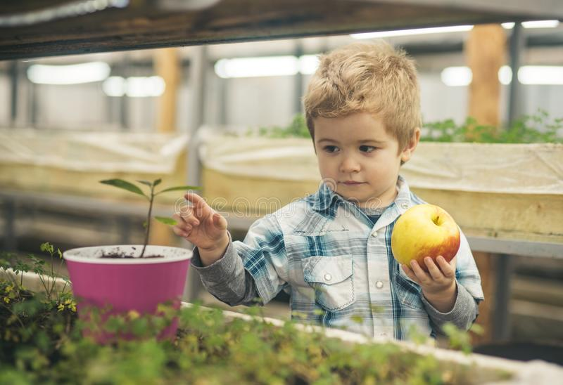 Ambiente saudável luta da criança para o ambiente saudável que crescem vegetal e o fruto ambiente saudável para o nosso imagem de stock