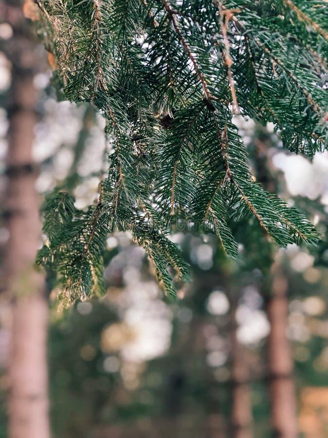 Ambientes del invierno fotografía de archivo libre de regalías