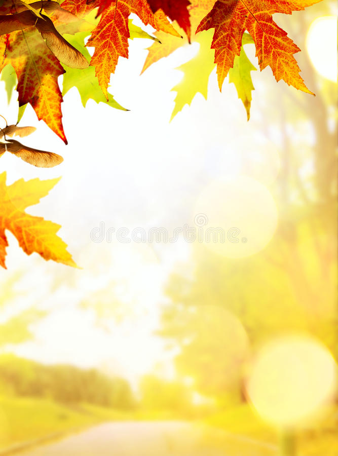 Ambiti di provenienza di autunno immagini stock