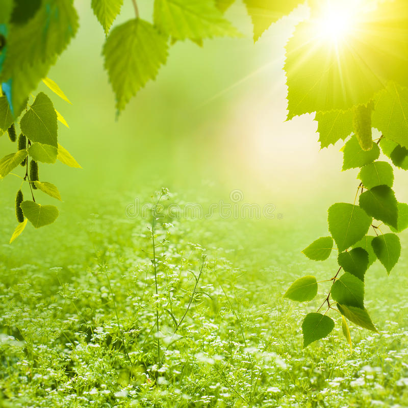 Ambiti di provenienza di estate di bellezza immagine stock libera da diritti