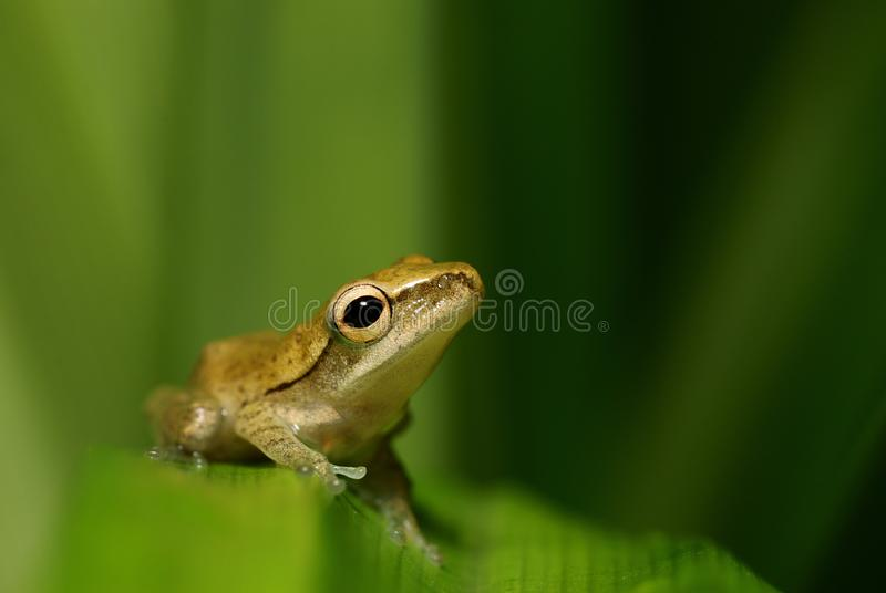 Ambitious frog gazing at the sky stock images