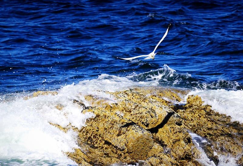 Ambitny ptak obrazy stock