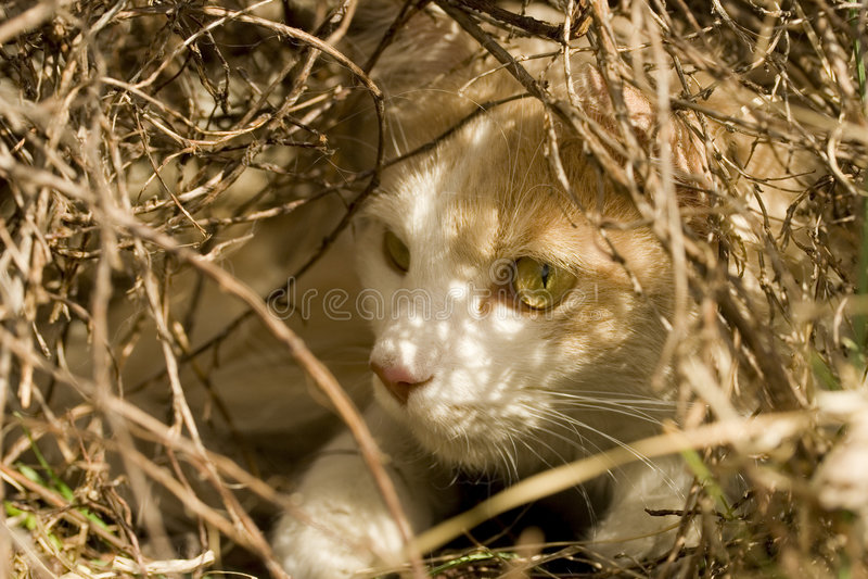 Download Ambush stock image. Image of outside, furry, hunting, domestic - 5034169