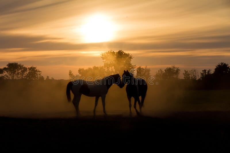 Ame cavalos fotos de stock