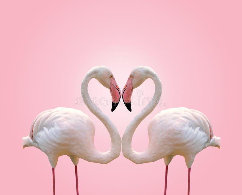 Ame o coração da forma do conceito do flamingo dos pares no fundo cor-de-rosa imagem de stock royalty free