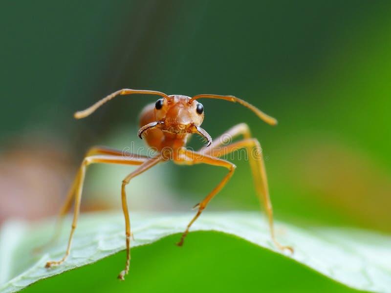 Ameise in der Aktion im Dschungel lizenzfreies stockfoto